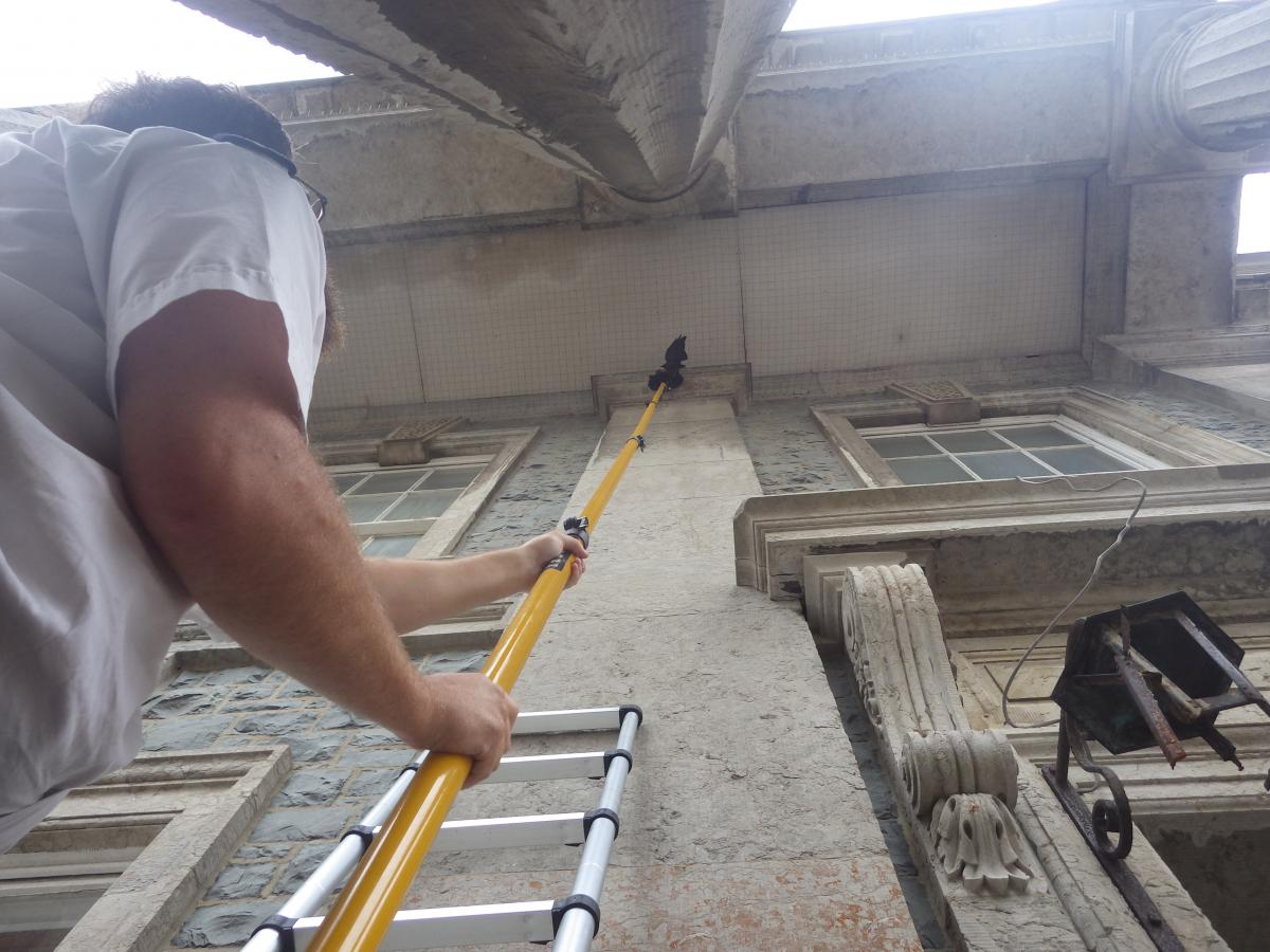 RSPCA, Animal Rescue, Rescue at Height, Bird Rescue, Rescue Net, Rescue Stick, RSPCA Animal Rescue