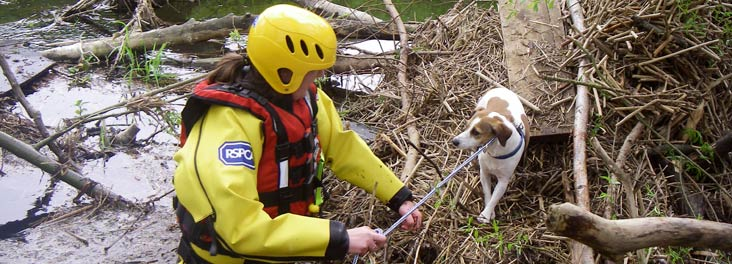 An image displaying RSPCA Volunteer rescuing a dog