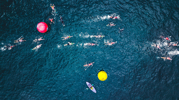 Top Down View of Open Water Swimmers
