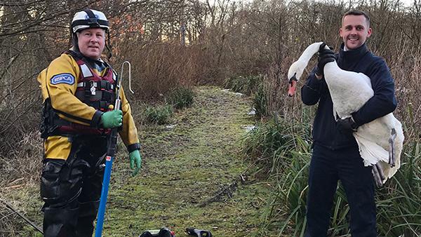 RSPCA Swan Rescue Image Header